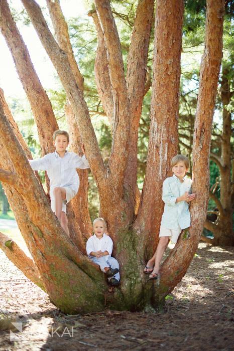 morton arboretum family pictures tree
