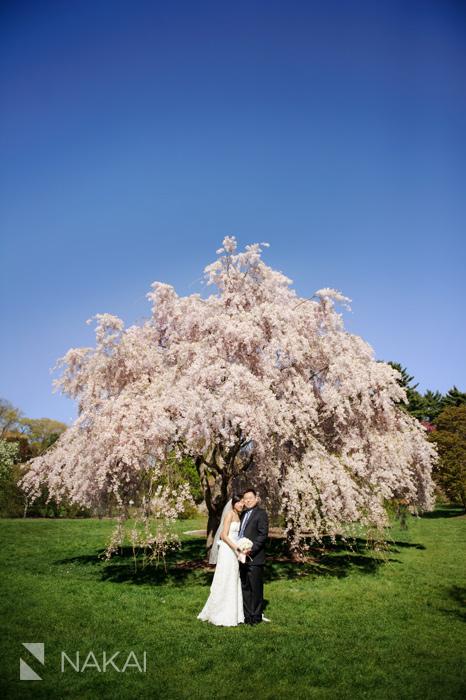 harvard arboretum boston tree wedding photo